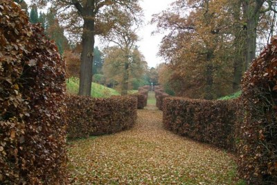 Chatsworth Serpentine Hedge